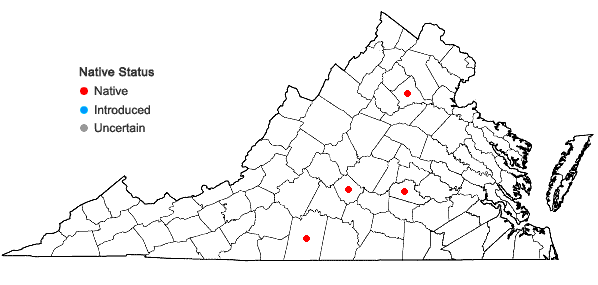 Locations ofIsoetes melanopoda Gay & Durieu in Virginia