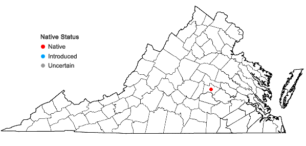 Locations ofIsoetes piedmontana (N.E. Pfeiffer) C.F. Reed in Virginia