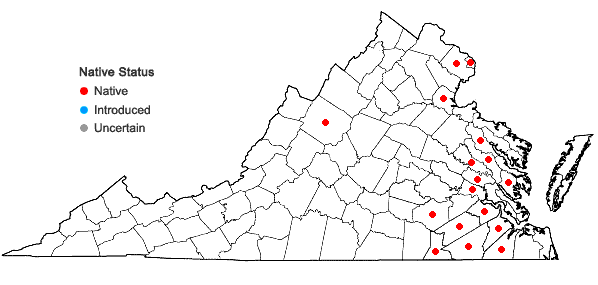 Locations ofIsoetes riparia Engelm. ex A. Braun in Virginia