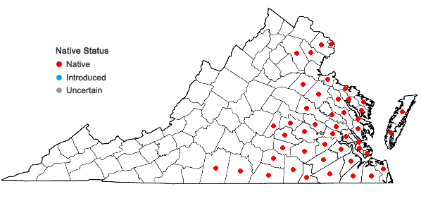 Locations ofItea virginica L. in Virginia