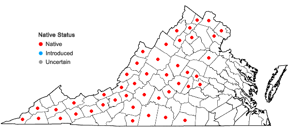 Locations ofJeffersonia diphylla (L.) Pers. in Virginia