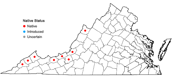 Locations ofJuncus articulatus L. in Virginia