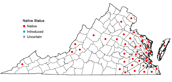 Locations ofJuncus debilis Gray in Virginia