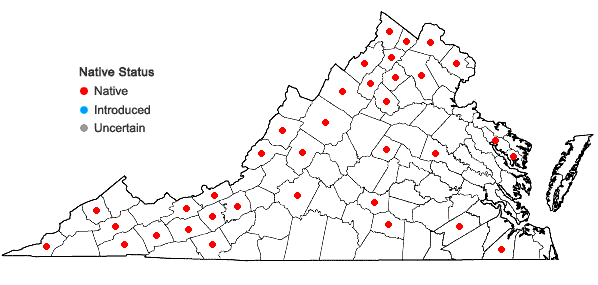 Locations ofJuncus dudleyi Wieg. in Virginia