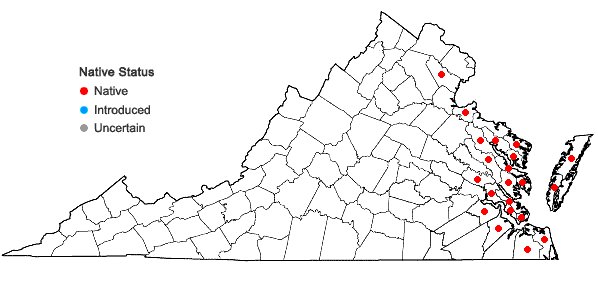 Locations ofJuncus roemerianus Scheele in Virginia