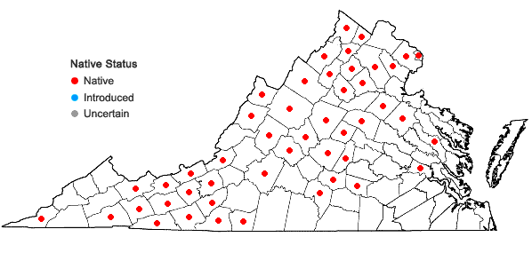 Locations ofJuncus subcaudatus (Engelm.) Coville & Blake in Virginia