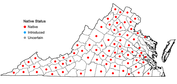 Locations ofJusticia americana (L.)Vahl in Virginia