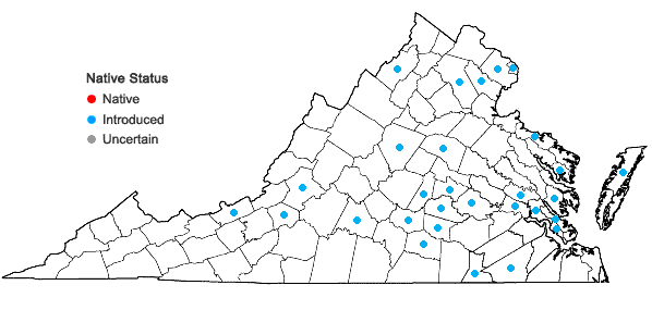 Locations ofKickxia elatine (L.) Dumort. in Virginia