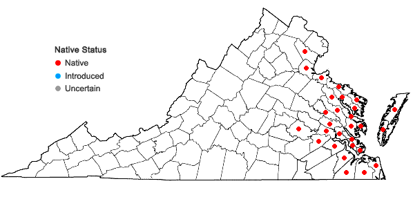 Locations ofKosteletzkya pentacarpos (L.) Ledebour in Virginia