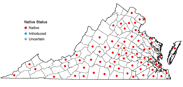 Locations ofKyllinga pumila Michaux in Virginia