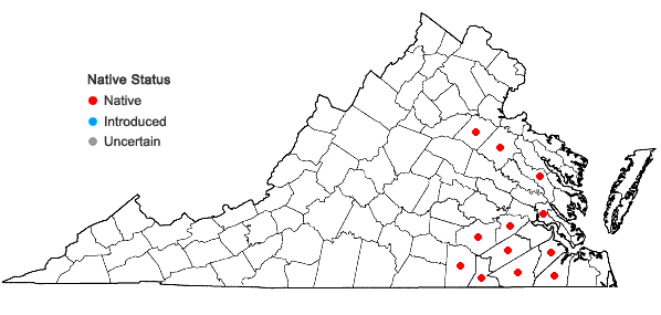 Locations ofLachnocaulon anceps (Walt.) Morong in Virginia