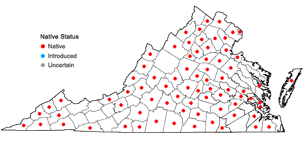 Locations ofLactuca floridana (L.) Gaertn. in Virginia