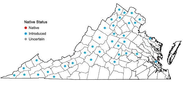 Locations ofLactuca saligna L. in Virginia