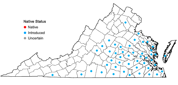 Locations ofLathyrus hirsutus L. in Virginia