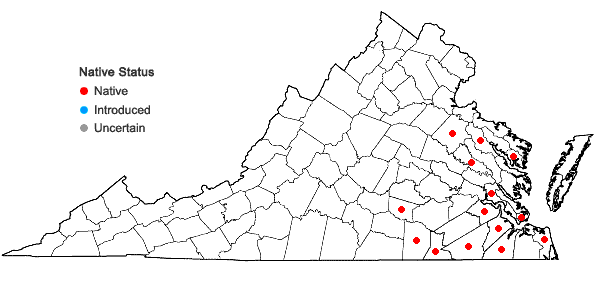 Locations ofLechea mucronata Raf. in Virginia