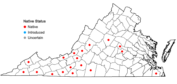 Locations ofLejeunea laetevirens Nees & Mont. in Virginia
