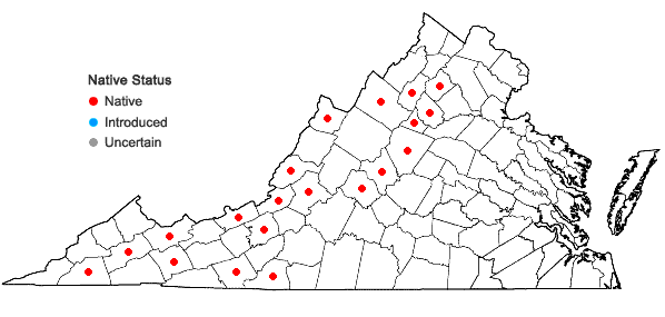 Locations ofLejeunea lamacerina (Steph.) Schiffn. ssp. gemminata R.M. Schust. in Virginia