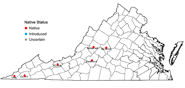 Locations ofLeucothoe fontanesiana (Steud.) Sleumer in Virginia