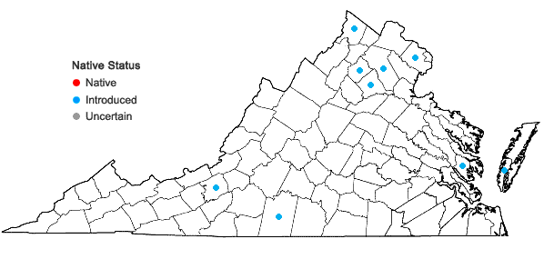 Locations ofLigustrum obtusifolium Sieb. & Zucc. var. suave (Kitag.) H. Hara in Virginia