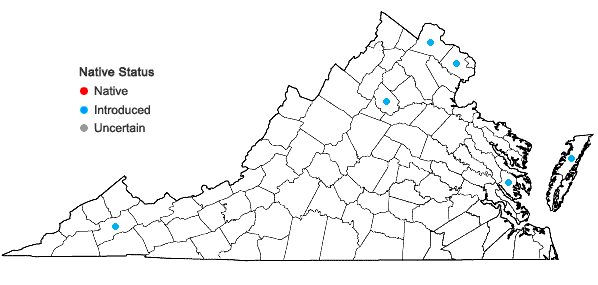 Locations ofLigustrum ovalifolium Hassk. in Virginia