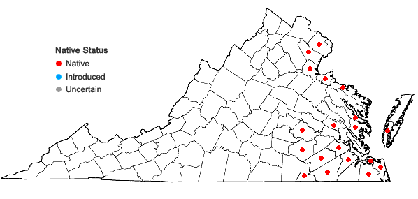Locations ofLimnobium spongia (Bosc) L.C.Rich. ex Steud. in Virginia