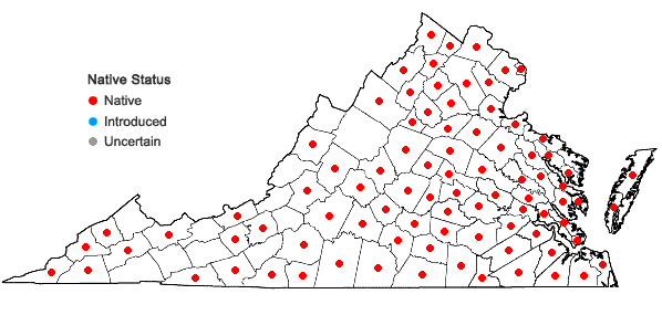 Locations ofLindernia dubia (L.) Pennell var. dubia in Virginia