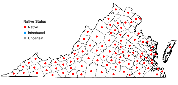 Locations ofLiparis liliifolia (L.) L.C.Rich. ex Ker-Gawl. in Virginia