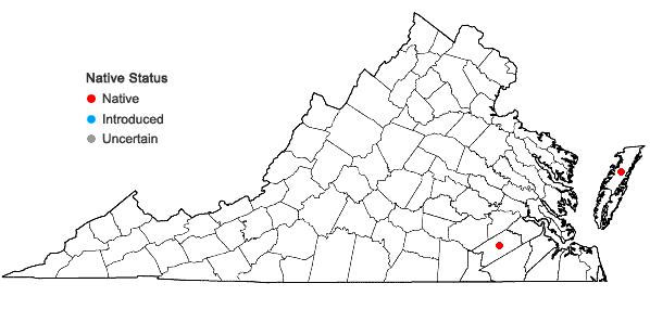 Locations ofLithospermum caroliniense (Walt. ex J.F.Gmel.) MacM. in Virginia