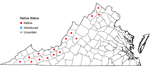 Locations ofLithospermum parviflorum Weakley, Witsell, & D. Estes in Virginia