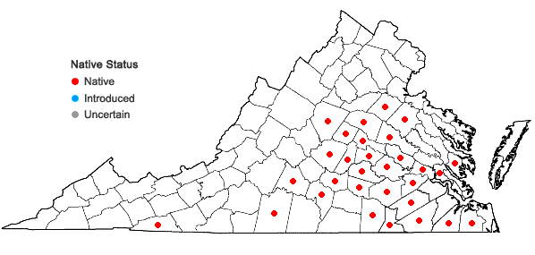 Locations ofLobelia georgiana McVaugh in Virginia