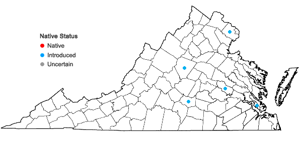 Locations ofLobularia maritima (Linnaeus) Desvaux in Virginia