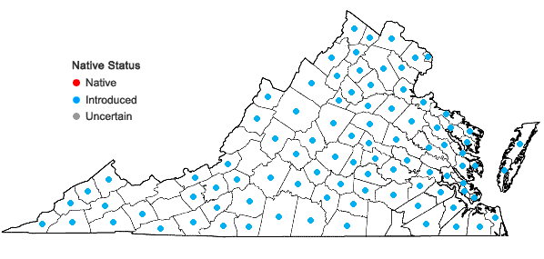 Locations ofLolium arundinaceum (Schreb.) Darbysh. in Virginia
