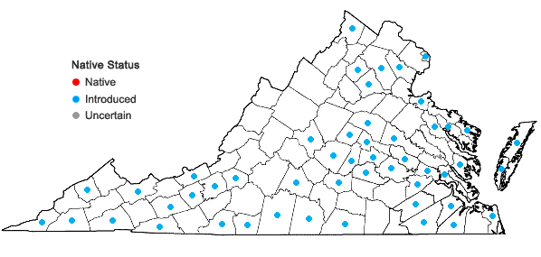 Locations ofLolium perenne L. var. aristatum Willd. in Virginia