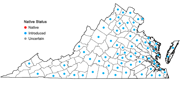 Locations ofLolium perenne L. var. perenne in Virginia