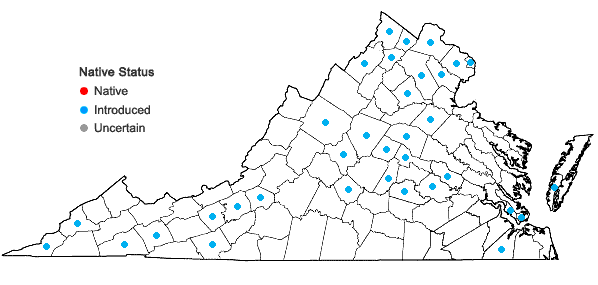 Locations ofLonicera maackii (Rupr.) Maximowicz in Virginia