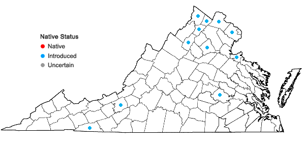 Locations ofLonicera xylosteum L. in Virginia