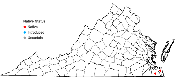 Locations ofLudwigia alata Elliott in Virginia