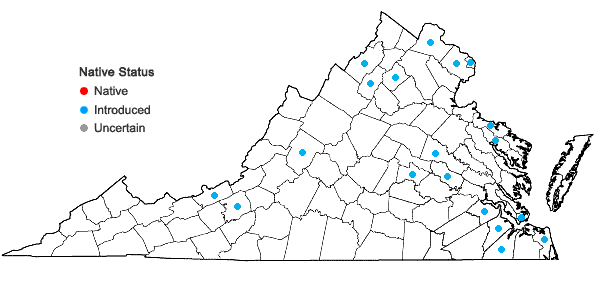 Locations ofLunaria annua Linnaeus in Virginia