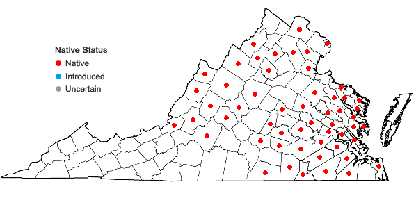 Locations ofLupinus perennis L. in Virginia