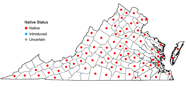 Locations ofLycopus americanus Muhl. ex W. Bart. in Virginia