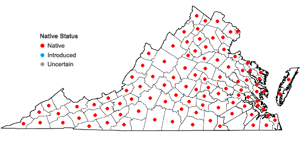 Locations ofLycopus virginicus L. in Virginia