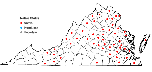 Locations ofLysimachia terrestris (L.) B.S.P. in Virginia