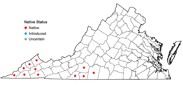 Locations ofLysimachia tonsa (Wood) Wood ex Pax & R. Knuth in Virginia
