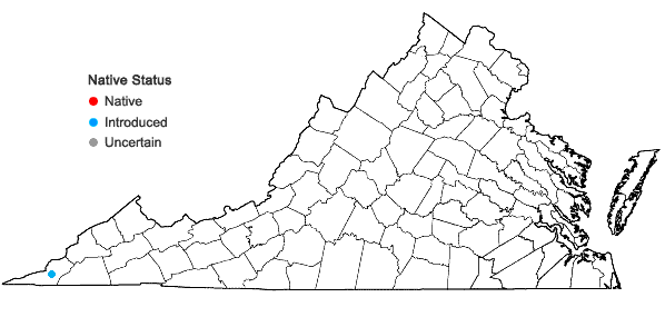 Locations ofMacrothelypteris torresiana (Gaud.) Ching in Virginia