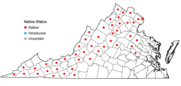 Locations ofMaianthemum canadense Desf. in Virginia