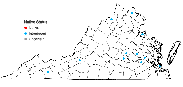 Locations ofMalva sylvestris L. in Virginia