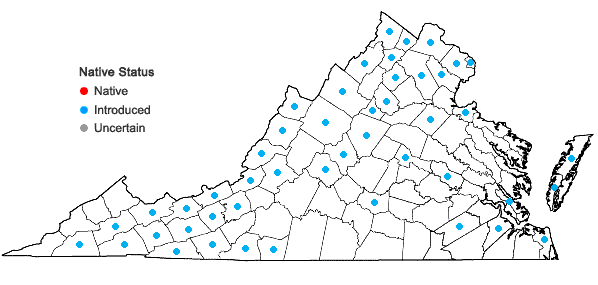 Locations ofMatricaria discoidea DC. in Virginia