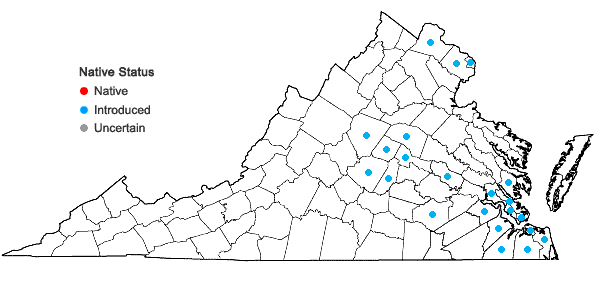 Locations ofMazus pumilus (Burm. f.) Steenis in Virginia