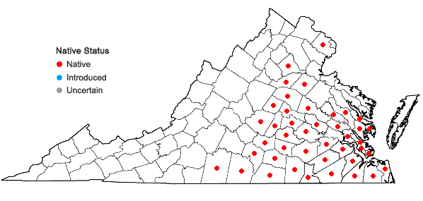 Locations ofMecardonia acuminata (Walter) Small var. acuminata in Virginia