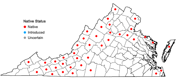 Locations ofMelampyrum lineare Desr. in Virginia